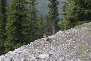 Tierische Wegbegleiter, Foto: ©Denise Ott